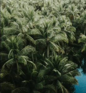 Drega – Kali Koi